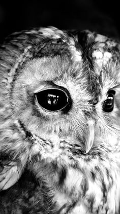 owl everything from owl designs to owl art the owls are here for you. owl be watching Tier Wallpaper, Animal Wallpaper, Wallpaper Desktop, Baby Wallpaper, Desktop Wallpapers, Wallpaper Backgrounds, Seagrass Wallpaper, Paintable Wallpaper, Emoji Wallpaper