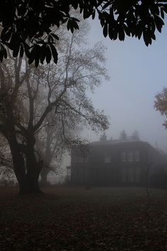 Sudley House in the autumn mist | by Towner Images