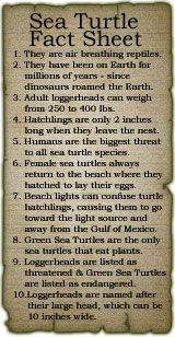 Sea Turtle Fact Sheet (from Beachview Cottages on Sanibel Page)