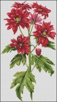Red Chrysanthemum and a few free large charts
