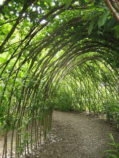 catepillar tunnel in children's garden Eden Project | Flickr - Photo Sharing!
