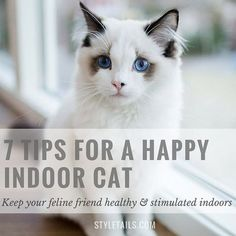 How to keep indoor cats happy and stimulated http://www.styletails.com/2014/09/30/wellbeing-7-tips-for-a-happy-indoor-cat/