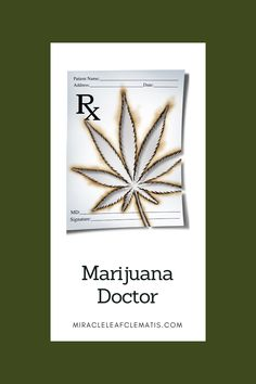 #MiracleLeafWestPalmBeach is located the downtown area at 513 Clematis St. Visit the marijuana doctor this week and start the process obtaining your medical marijuana card today! #FloridaMarijuana #MiracleLeaf #MarijuanaCard #MMURegistry #LegalMarijuana Perfect Image, Perfect Photo, Love Photos, Cool Pictures, Palm Beach Fl, Medical Marijuana, Clematis, Doctors, Thats Not My
