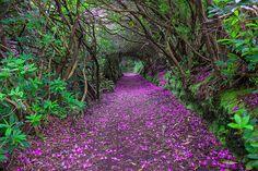 Les 25 Chemins les plus beaux au Monde (2)