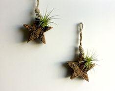 Estrella madera pequeña del colgante de pared montado con planta de aire y musgo / Tillandsia aire planta / decoración rústica decoración woodland ornamento de la pared