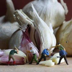 miniature photography and the art of little people! Garlic harvest...