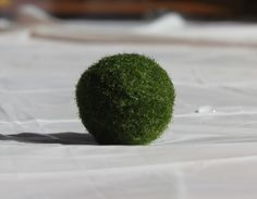 Marimo moss ball care