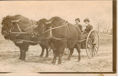 Bison-drawn carriage in Sioux Falls, South Dakota 1900 : OldSchoolCool Western Film, Vintage Pictures, Old Pictures, Native American Art, American History, American Bison, Sioux Falls South Dakota, Old West Photos, Foto Picture