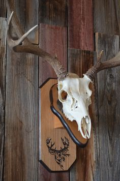 Etched Mule Deer plaque shown with skull. Available on Skullplax Kickstarter June 1 - July 15, 2013. Then look for it on our website skullplax.com after July 15, 2013