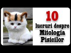 Facebook, Education, Cats, Youtube, Animals, Gatos, Animales, Animaux, Animal