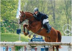 The Sport Horse Show and Breed Database - Salvador V
