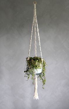 "Macramé Plant Hanger ""Eva"" - ByHelgaM on Etsy / Macrame / Makramé / Makrame / Macramee / Macramade / Handmade Decor / Handmade Plant Hanger / Boho Deco / Bohemian / Scandinavian / Retro Planthanger / Macrame Planthanger / Peperomia / Peperomia Prostrata / Plant / Kalklitir / Winter Primo"