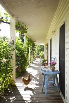 Reminds of me of our Farm -long porch on both sides of house & the round columns...like the idea of chicken roaming around but not the droppings lol~