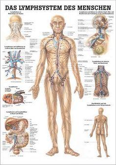 Das Lymphsystem des Menschen, 24 x 34 cm, papier: https://www.kallmeyer-naturheilpraxis.de