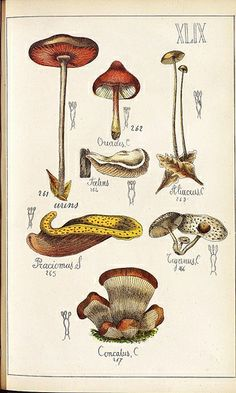 'Histoire Naturelle des Champignons Comestibles et Vénéneux' [The natural history of edible and poisonous mushrooms] by the French pharmacist, Guilliame Sicard, was published in 1883