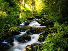 Resultado de imagen para imagenes de la selva