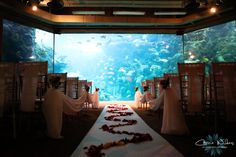I'm getting married at an aquarium. It's decided.