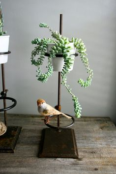 bird on a pot stand