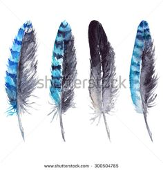 stellers jay feather - Google Search