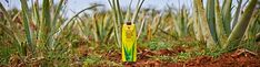 Aloe as Nature Intended Marketing Opportunities, Dream Book, Forever Living Products, Aloe Vera, Nature, Naturaleza, Nature Illustration, Off Grid, Natural