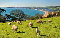 Strete - Lambs in Dartmouth UK Dartmouth England, Holiday Competitions, Devon Coast, British Travel, South Devon, Short Break, Luxury Holidays, Great British, Beautiful Beaches