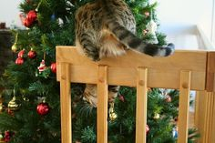 How to: Cat-Proof your Christmas Tree