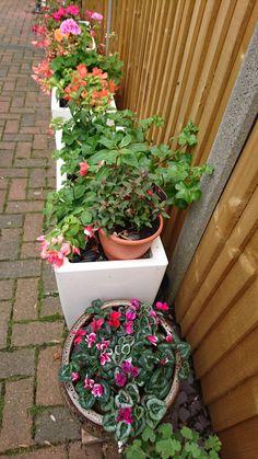 My planters