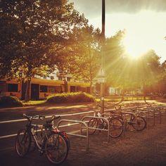 Sunset along Danzigerstr. #berlin