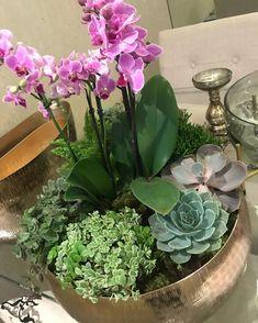 Orchid Flower Arrangements, Orchid Planters, Tropical Floral Arrangements, Succulents Garden, Indoor Plant Pots, Flower Aesthetic, Flower Seeds, Container Gardening, Fake Flower Arrangements
