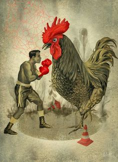 Boxer fighting rooster