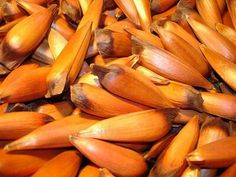 Pinones de araucaria Salty Foods, The Good Place, Carrots, Vegan Recipes, Seeds, Snacks, Fruit, Vegetables, Landscape Architecture
