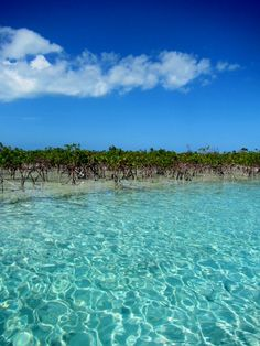The Mangroves, Fernandez Bay, Cat Island, Bahamas, you can find sting rays, sea turtles, manatee's and blue holes. So beautiful, if you stay to the right the entire time you will come out to a private beach but you'll have to fight the tide a bit, bring a picnic basket with you.