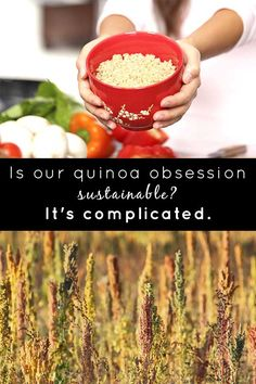 When it comes to the sustainability of quinoa, the story is more than just black and white. The tasty superseed has its upsides and downsides.