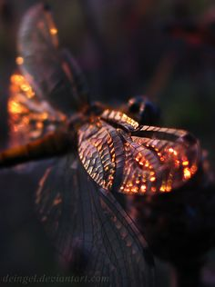 wings of a dragonfly ✨✨
