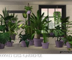 Advent 2013 - The Twelve Days of GoSmas - WFS potted plants repositoried