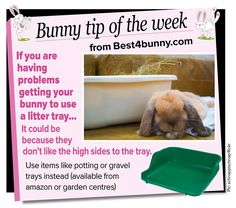 Bunny tip of the week - litter trays to help with litter training
