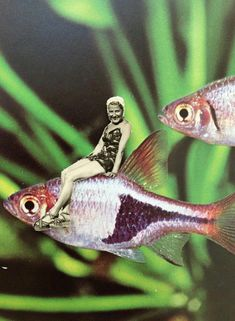 fun collage by bonnita postma. Soul Collage, Mixed Media Collage, Collage Art, Fish Collage, Dream Collage, Paper Collages, Surreal Collage, Surreal Art, Photomontage
