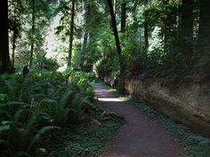 Praire Creek Redwoods State Park