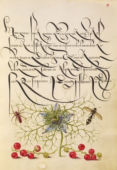 Siamo nel 1561, a Vienna. Alla corte di Ferdinando I d'Asburgo, Imperatore del Sacro Romano Impero, c'è un segretario e calligrafo di nazionalità ungherese ma nato in Croazia. Si chiama Georg Bocskay e si è messo in testa di dimostrare ai contemporanei e ai posteri la sua immensa abilità nell'arte della calligrafia. Bocskay lavora per un anno al suo Mira calligraphiae monumenta, mettendoci dentro tutti i tipi di scrittura a lui conosciuti, compresi quelli del passato. È un lavoro ...