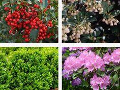 8 no-fail shrubs for all-season performance and a beautiful garden