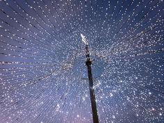 sparkle everywhere Dandelion, Sparkle, Flowers, Plants, Dandelions, Plant, Taraxacum Officinale, Royal Icing Flowers, Flower