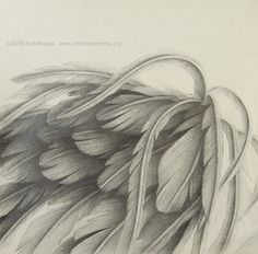 realistic angel wings drawing - Google Search