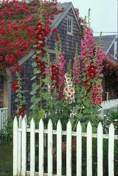 My Secret Garden needs a white picket fence. Love the rose on the roof as well! - My Secret Garden needs a white picket fence. Love the rose on the roof as well! Hollyhocks can crea -