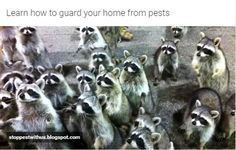 http://stoppestwithus.blogspot.com/2015/11/learn-how-to-guard-your-home-from-pests.html | Learn how to guard your home from pests - Few ways how to guard your home from pests