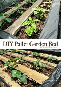 DIY Pallet Garden; How to make Raised Wood Pallet Garden Bed via @2creatememories