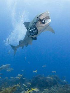 Tiger shark steals camera from photographer Karen Brussaard