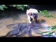 ป้อนอาหารปลา อย่างโหด!!! Feeding fish Savage