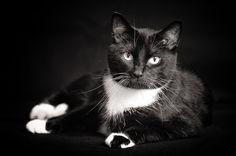 Frank the Cat by Jon Hayward Pet Photography