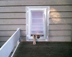 Wall-insert doggie door