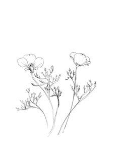 california poppy, day 8. 100 days project, erin ellis.